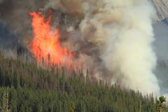 Stock Photo of Forest fire in the Rocky Mountains