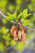 New leaves in the springtime - stock photo