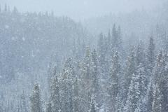 Blizzard in the forest 01 - stock photo