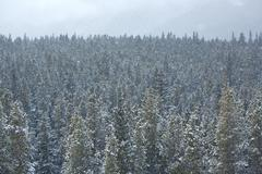 Stock Photo of Snowfall in the forest 01