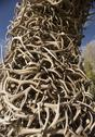 Stock Photo of stack of antlers from the elk reserve
