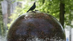 Pigeons standing and drinking water on the fountain in the park. - stock footage