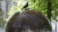 Stock Video Footage of Pigeons standing and drinking water on the fountain in the park.