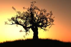 Old Tree in the Sunset Loneliness Retirement Concept Stock Illustration