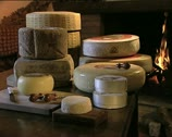 CHEESE italian cheeses on a table Stock Footage