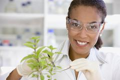 African scientist performing analysis in laboratory on plant Stock Photos