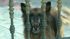 Dog Barking Stock Footage