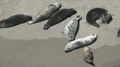 Seals 2 Stock Footage
