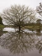 tree in flooded river - stock photo