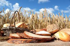 bread and grain - stock photo