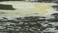 Stock Video Footage of Pollution in River 03