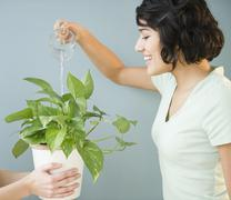 Hispanic woman watering plant Stock Photos