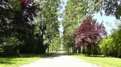 Romantic Nature Road with Trees 01 Stock Footage