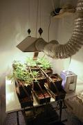Indoor Marihuana Hydroponic system - stock photo