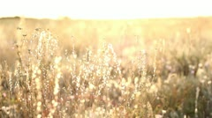 Sunrise In The Steppe Stock Footage