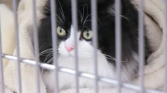 Black and white cat inside a cage (HD) c Stock Footage