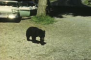 Stock Video Footage of Vintage Bear with Tourists.