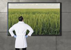Hispanic scientist looking at agricultural image on television screen Stock Photos
