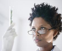 Black scientist looking at herb in test tube Stock Photos