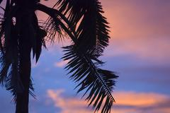 coconut palm tree and sunset - stock photo