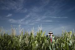 Caucasian businessman using binoculars in corn field Stock Photos
