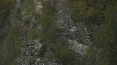 A rock in the forest Stock Footage