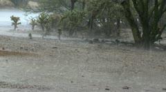 Monsoon Cactus Rain Stock Footage