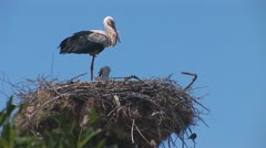 Stork standing in the nest 4 Stock Footage