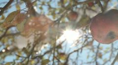Apple Sunburst Stock Footage