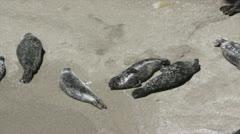 Seals Stock Footage