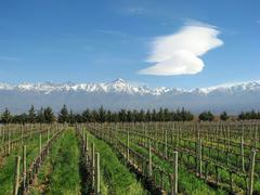 Vineyard at the foothills of the Andes Stock Photos