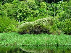 Stock Photo of Amazonian landscape