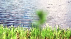 Green grass on coast Stock Footage