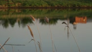 Reeds on the lake evening Stock Footage