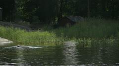 Reeds on the Baltic sea coastline Stock Footage