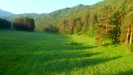 Flightabove forest field HD Stock Footage
