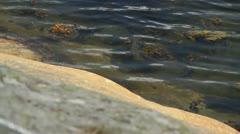 Smooth Rocky coast in Swedish archipelago on Baltic coast Stock Footage