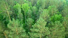 Forest HD Stock Footage