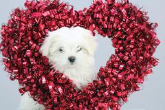 Puppy Lover Heart Stock Photos