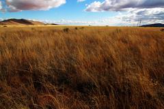 Desert Grassland Stock Photos