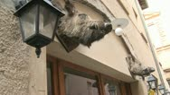Stock Video Footage of A boar head hangs outside a restaurant in Italy.