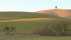 One lonely solitary tree stands on a distant hill in Tuscany Italy suggesting Stock Footage