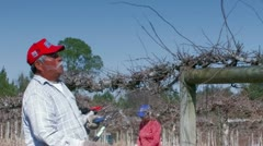 Workers pruning grapevines in a vineyard field Stock Footage