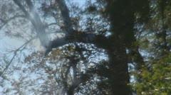 Stock Footage - Emergency Scene - Intense fire - trees in woods Stock Footage