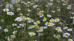 Daisy wheel Stock Footage