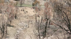 Fire burn area dead trees and ash P HD 2463 Stock Footage