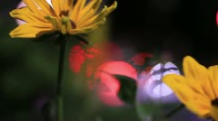 City flower abstract Stock Footage