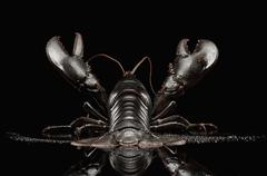 Close up of black lobster Stock Illustration