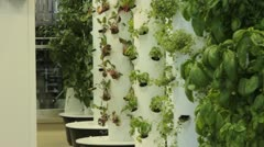Greenery growing out of posts in greenhouse (HD) c Stock Footage