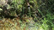 Water source Stock Footage